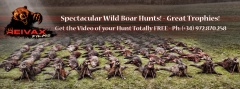 REIVAX FILMS_WILD BOAR DRIVEN HUNTS